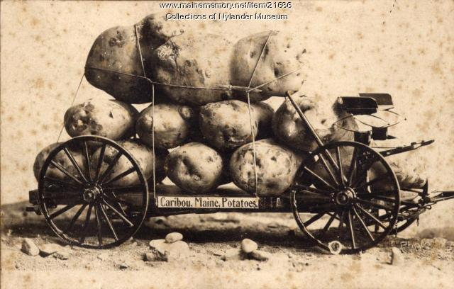 Joke photograph promoting Aroostook County Potatoes, Caribou, ca. 1922