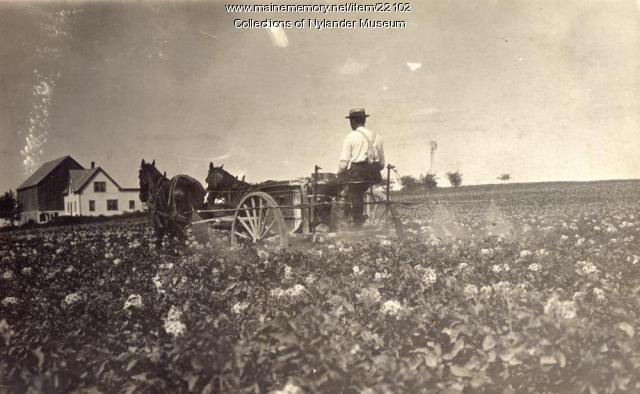 Spraying a potato field, New Sweden, ca. 1922