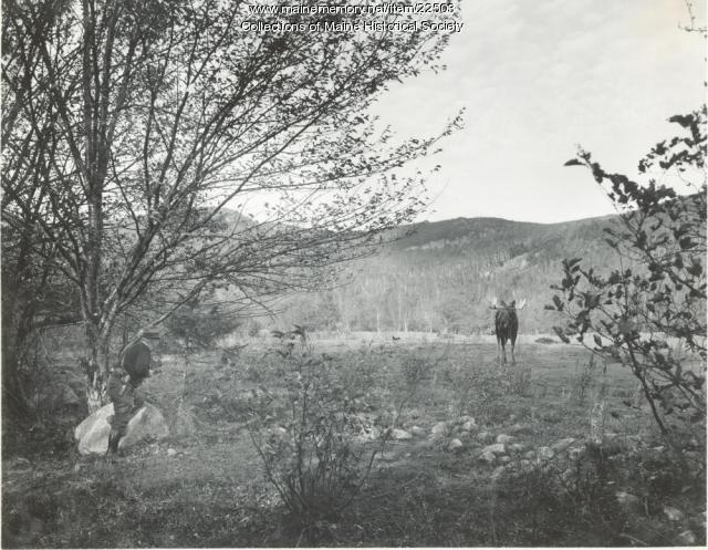 Warden William R. French and moose, Stoneham, ca. 1938