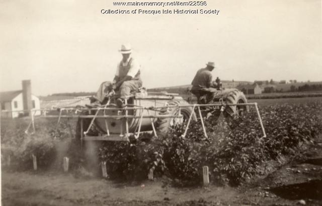 Spraying Potatoes, Presque Isle, 1942
