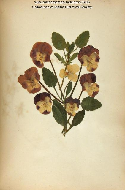 Pressed flowers, ca. 1840