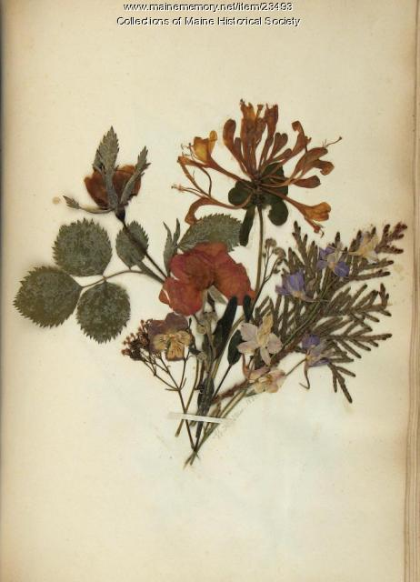 Pressed flower bouquet, 1851