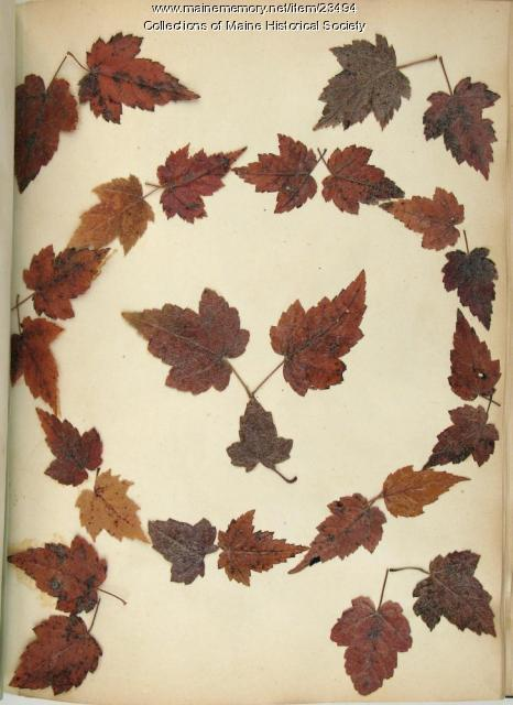 Fall foliage, ca. 1840