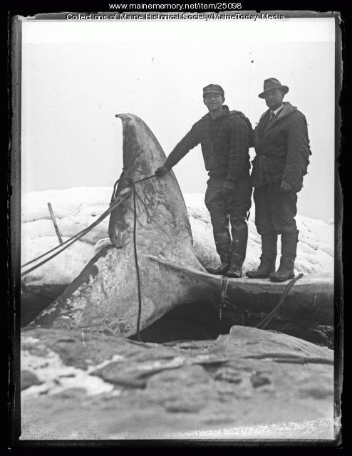 Albert Doughty and Chester Black with beached whale, Ragged Island, 1927