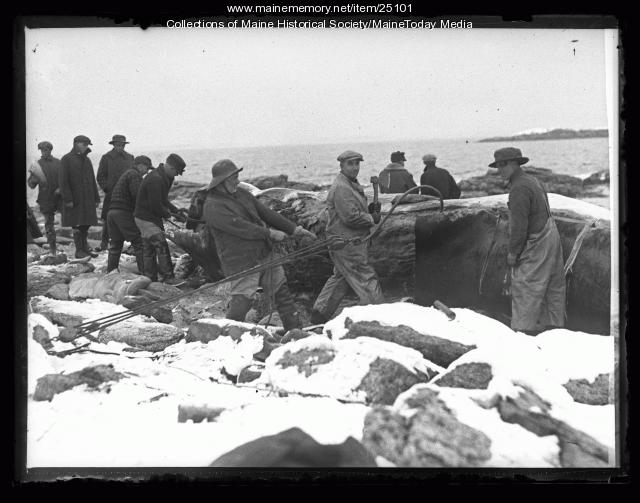 Fishermen with beached whale, Ragged Island, 1927