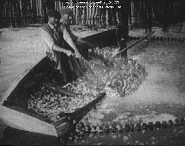 Catching sardines, Eastport, ca. 1930