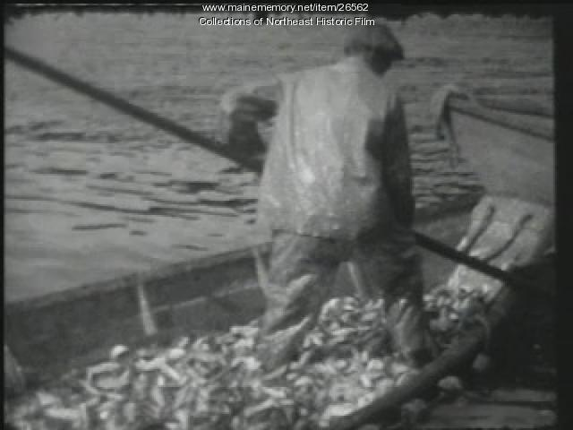Herring fishing, Mt. Desert, ca. 1940