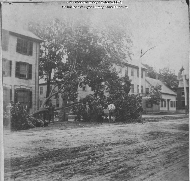 Tree Felling, Saco, ca. 1890
