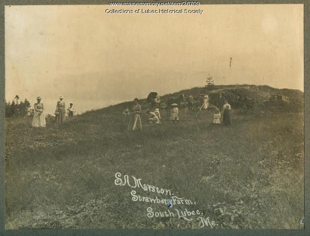 S. A. Marston Strawberry Farm, Lubec, ca. 1890