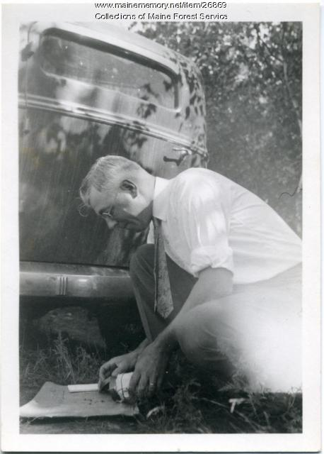 Releasing parasites, Bar Harbor, 1935