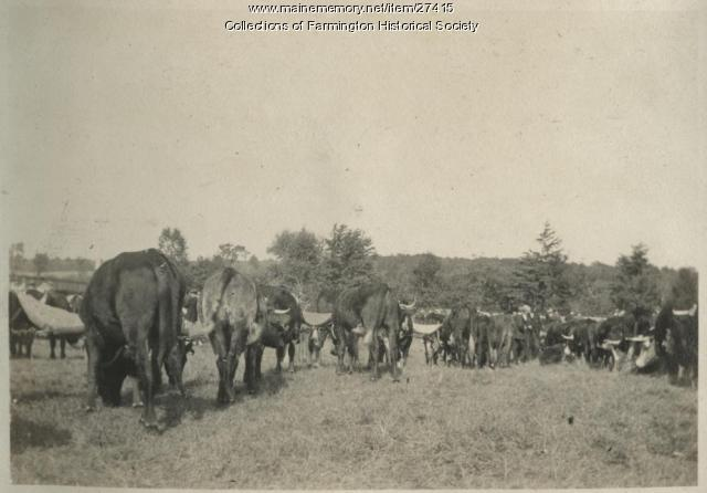 Farmington Cattle Show, 1917