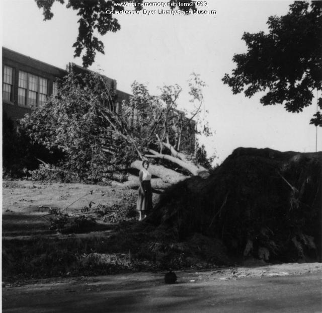 Old Orchard Beach High School, Hurricane Carol, 1954