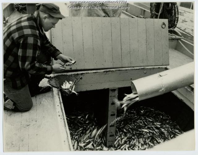 Captain Glen Leighton aboard sardine carrier, 1941