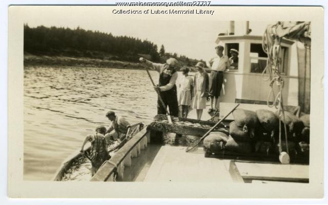 Herring unloaded, Lubec, ca. 1930