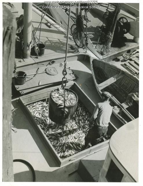 Unloading herring from carrier, Lubec, 1941