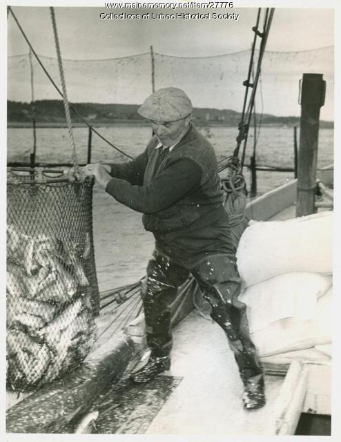 Herring being retrieved from weir, Lubec, 1941