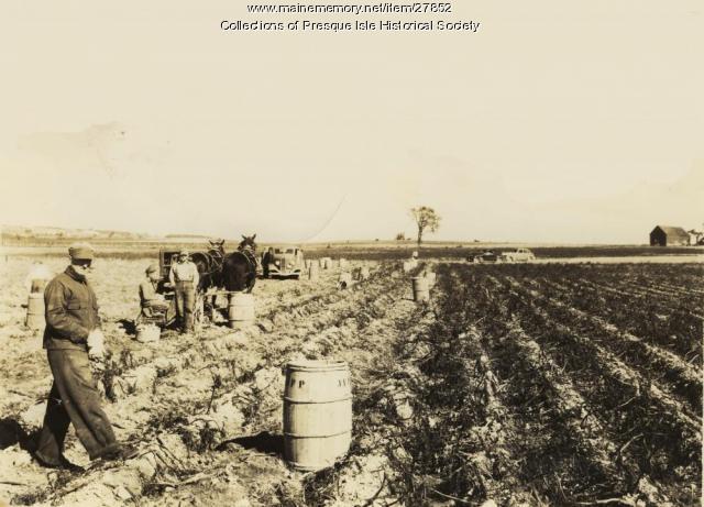Harvesting Potatoes, Presque Isle, 1940