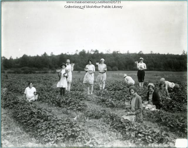 Girls picking strawberries, Biddeford, 1925