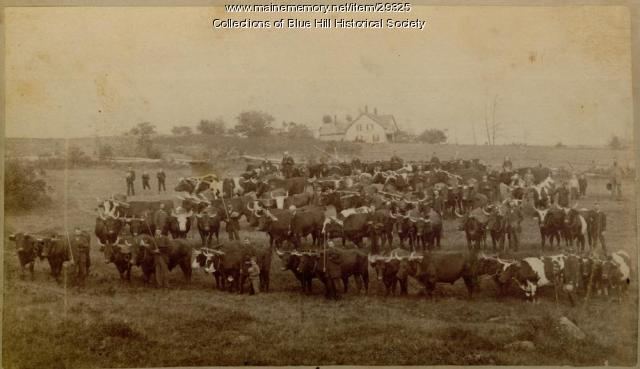 Blue Hill Agricultural Fair, ca. 1875