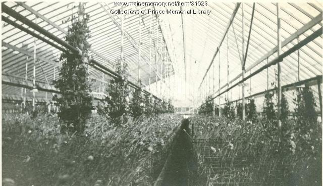 Arno S. Chase greenhouse interior, Cumberland, 1930