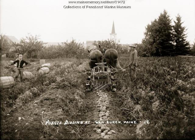 Potato digging, Van Buren, ca. 1915