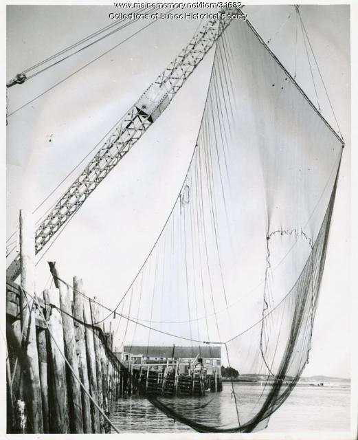 Pollock net, Lubec, ca. 1954