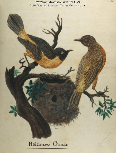Baltimore Orioles, Blue Hill, 1814