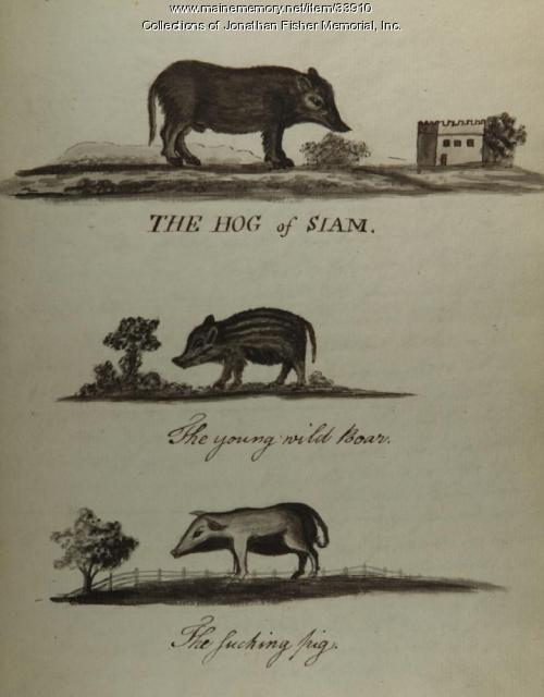 Three watercolors of hogs, Blue Hill, ca. 1814