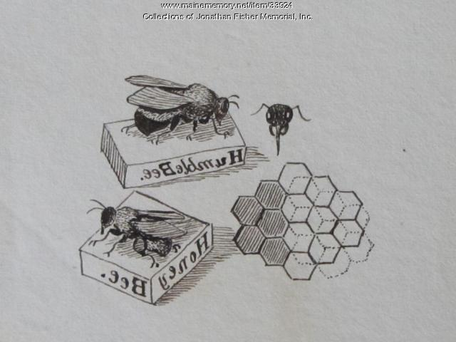 Bees and Honeycomb, ca. 1834