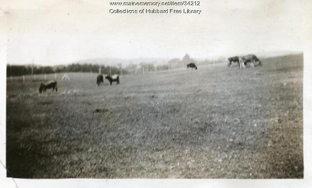 Vaughan Farm, Dairy herd, Hallowell, ca. 1933