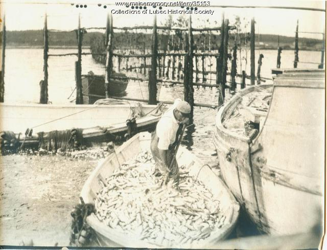 Herring weir herring transfer, Lubec, ca. 1935