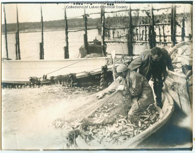 Herring weir brush leader, Lubec, ca. 1935