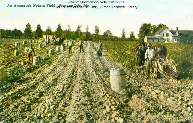 Aroostook potato field, Presque Isle, ca. 1915