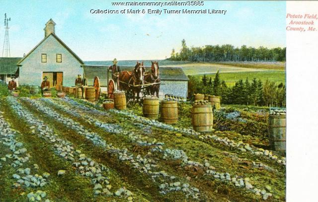 Potato harvest, Aroostook County, ca. 1910