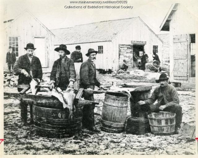 Dressing fish at Biddeford Pool, ca. 1875