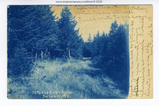 Trail to Porcupine Spring, Lubec, 1909