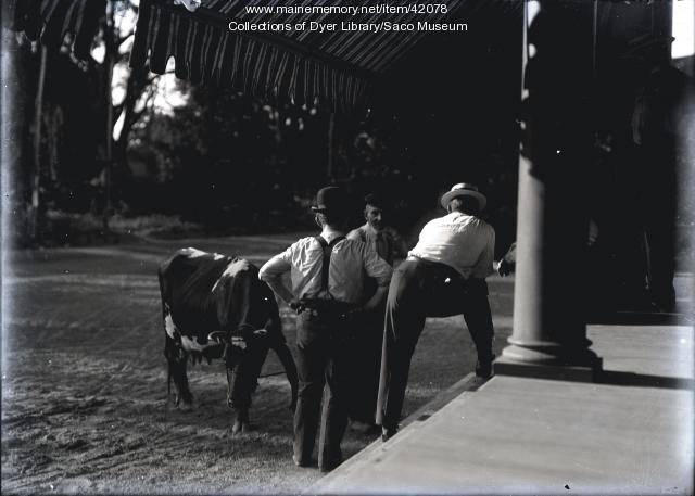 Men discussing cow, ca. 1912