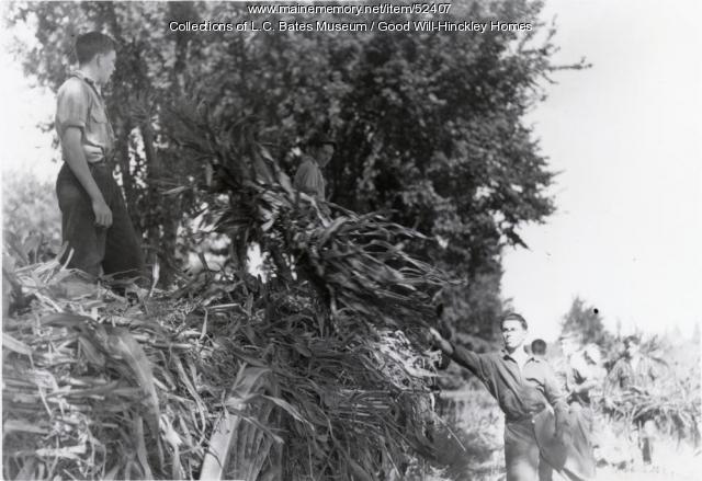 Good Will Boys Harvesting Corn, Fairfield, ca. 1935