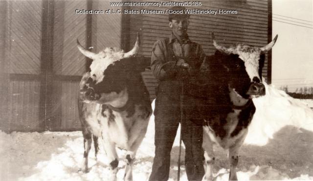 Farm hand with cows, Fairfield, ca. 1935
