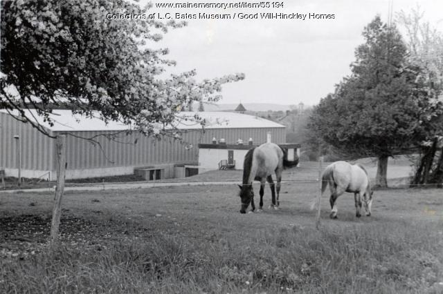 Grazing horses, Fairfield, ca. 1970