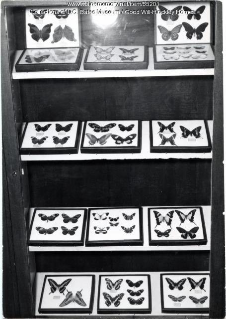 Cananello Butterfly Collection, Fairfield, ca. 1955