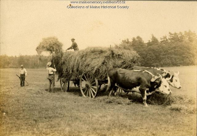 Haying, Nonesuch Farm, Scarborough, ca. 1900