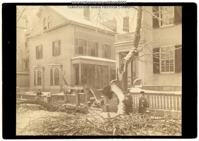 Ice storm damage, 1886