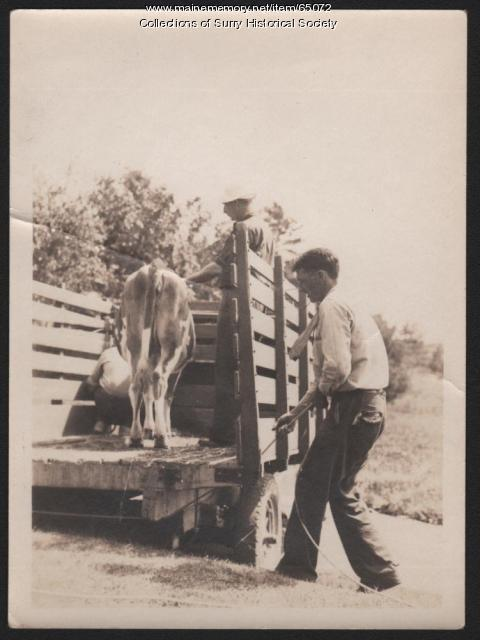 Farming, Surry, ca. 1930