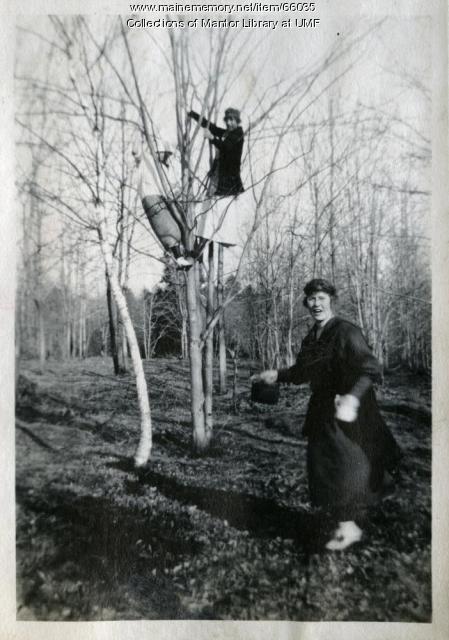 Tree climbing, Farmington, ca. 1917