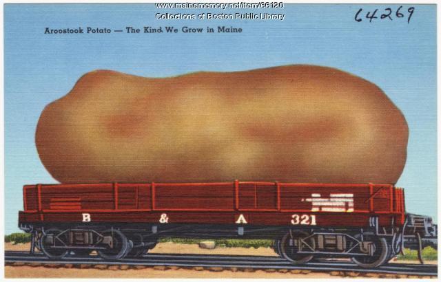 Aroostook potato postcard, ca. 1935