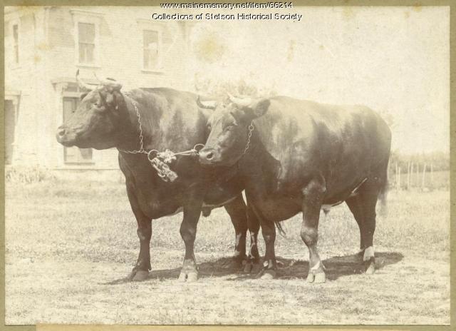 Mt. Katahdin and Granger, Stetson, ca. 1906
