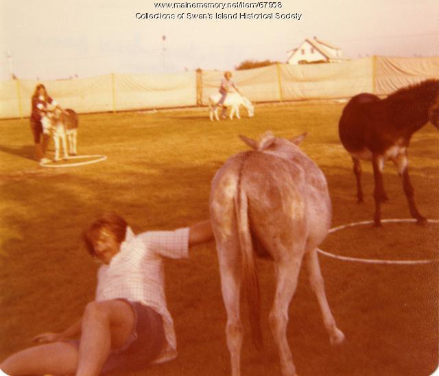 Donkey softball game, Swans Island, 1978