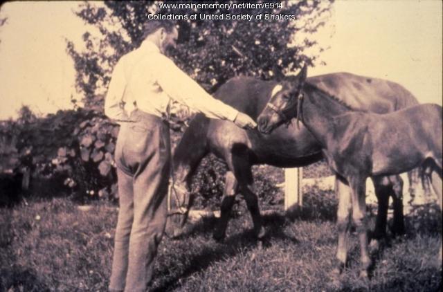 Elder William Dumont with Jennie and colt, Sabbathday Lake, ca. 1910