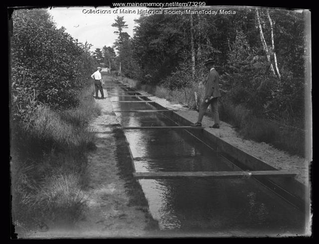 Breeding pools, Clear Spring Trout Ponds, Bar Mills, 1924
